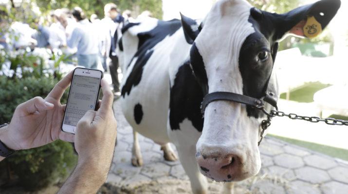 Tambero.com, chat para hablar con la vaca