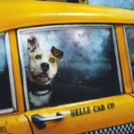 Easy Taxi ahora acepta llevar mascotas