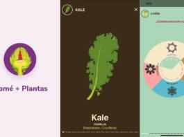 Comé+Plantas: así funciona la app de Microsoft y Narda Lepes para aprender cómo comer y cocinar vegetales
